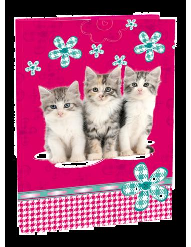 Box na zošity A4 Cats